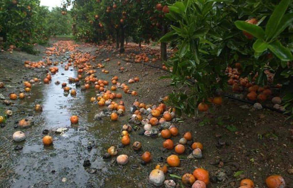 El MAPA destina casi 1,83 M€ a financiar avales para 40 M€ de créditos en el sector citrícola