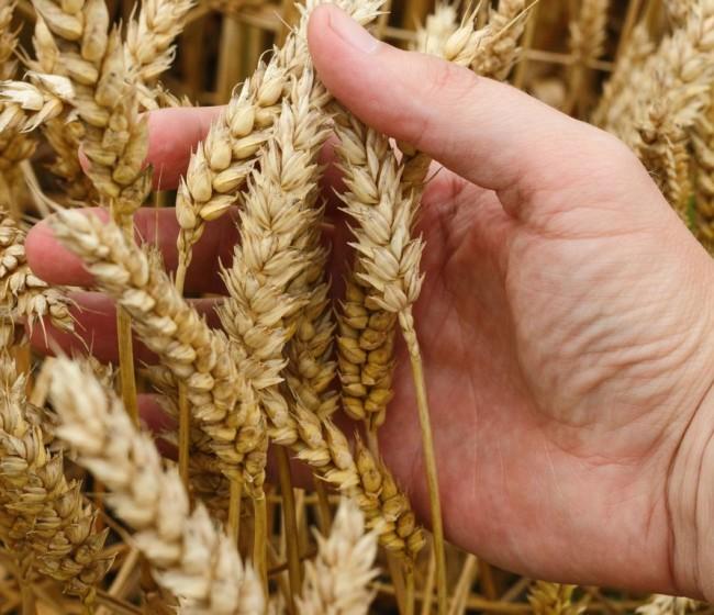 EAS Group distribuirá en Europa la tecnología de análisis de la funcionalidad del suelo de Biome Makers