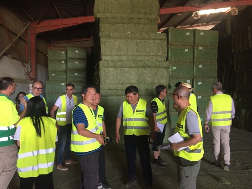 Cinco de las seis principales empresas chinas de lácteos se interesan por la alfalfa deshidratada española