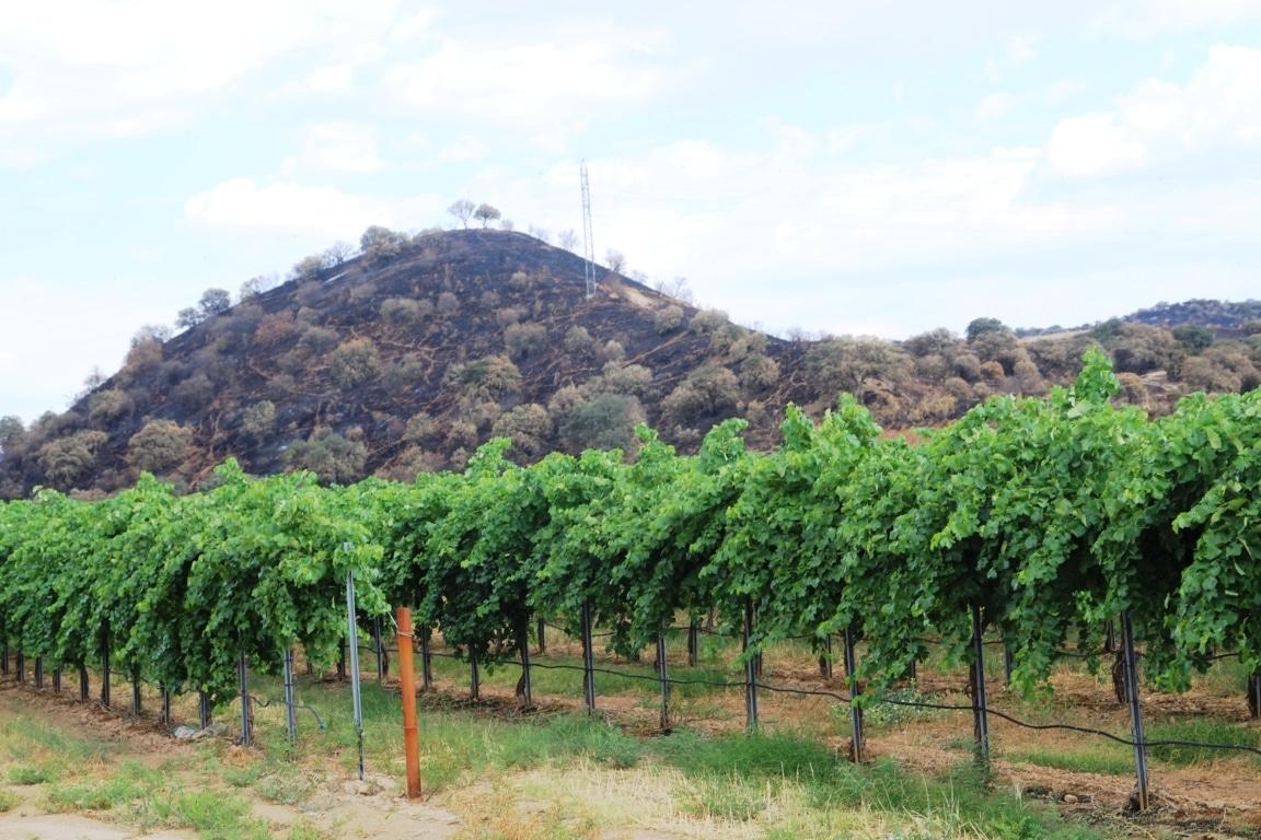 Agricultura brinda apoyo para la restauración de las zonas afectadas por incendios forestales el 28 de junio