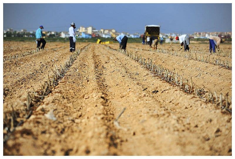 Junio no fue un buen mes para la actividad agraria en España: sube el paro,  baja la afiliación