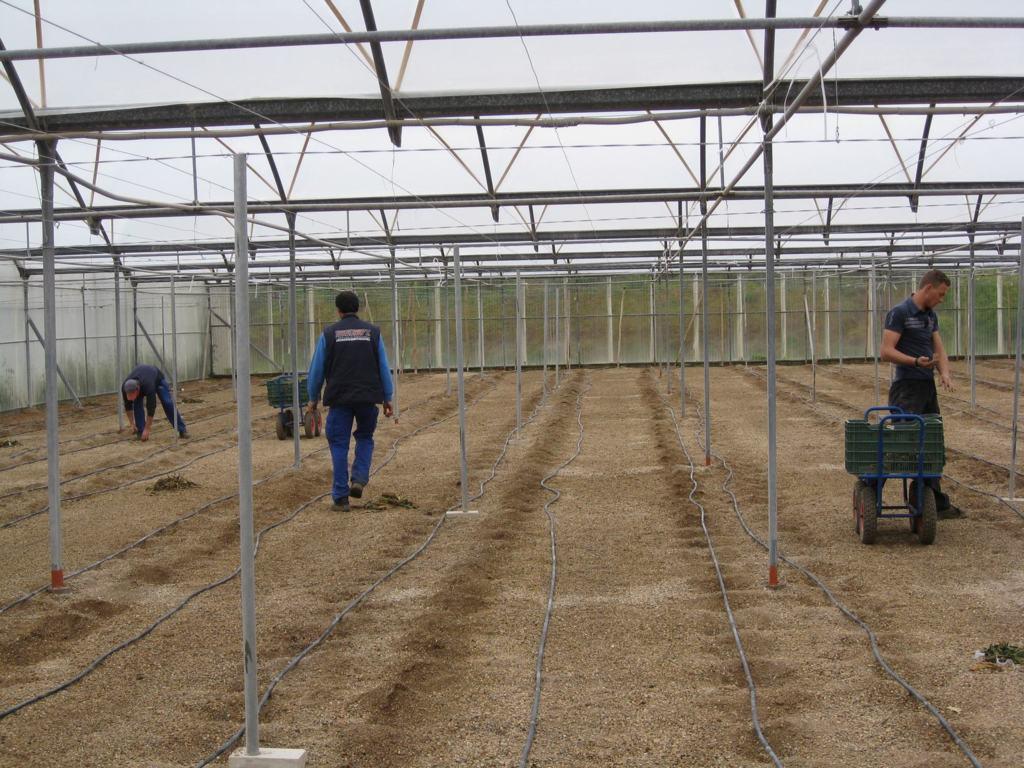 La sequía y el fin de campañas agrícolas bajó la actividad en el sector agrario hasta junio