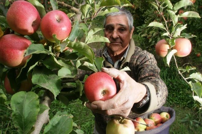 Recuperación de la cosecha nacional de manzana y pera en la nueva campaña 2019/20