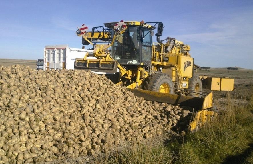 La Rioja concederá una ayuda directa de hasta 500 €/ha para los cultivadores de remolacha azucarera