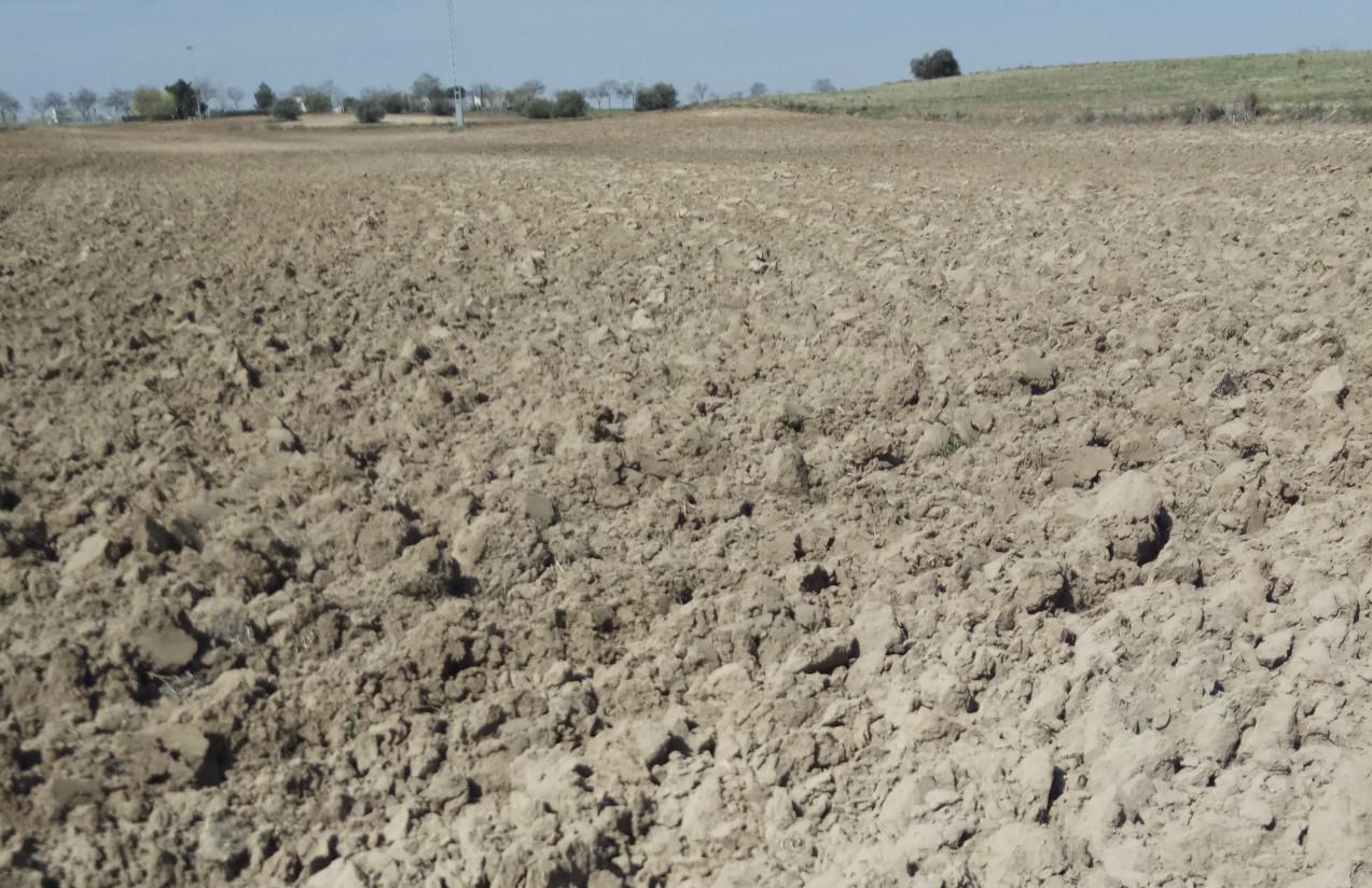 Las indemnizaciones del seguro agrario por sequía en el cereal superarán los 100 M€ esta campaña
