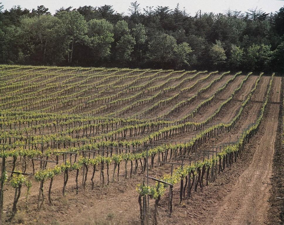 Viticultores valencianos protestarán también el 5-S por la crisis de precios de la uva para cava