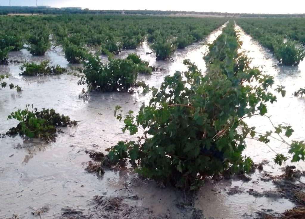 El granizo destroza más de un 90% de la cosecha de aceituna y un 75% de la de uva en Arganda del Rey