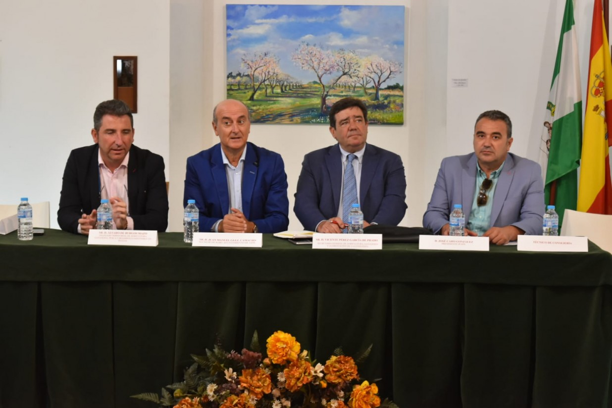 Cerca de la mitad de la cosecha nacional prevista de naranjas en 2019-2020 se recogerá en Andalucía