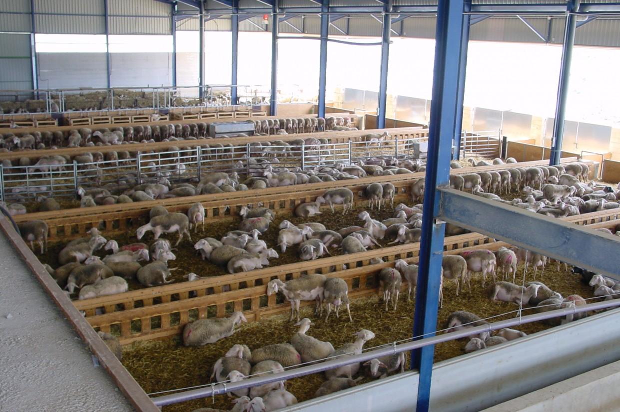 SEOC destaca que el PRAN del ovino-caprino reducirá en tres años un 60% los antibióticos