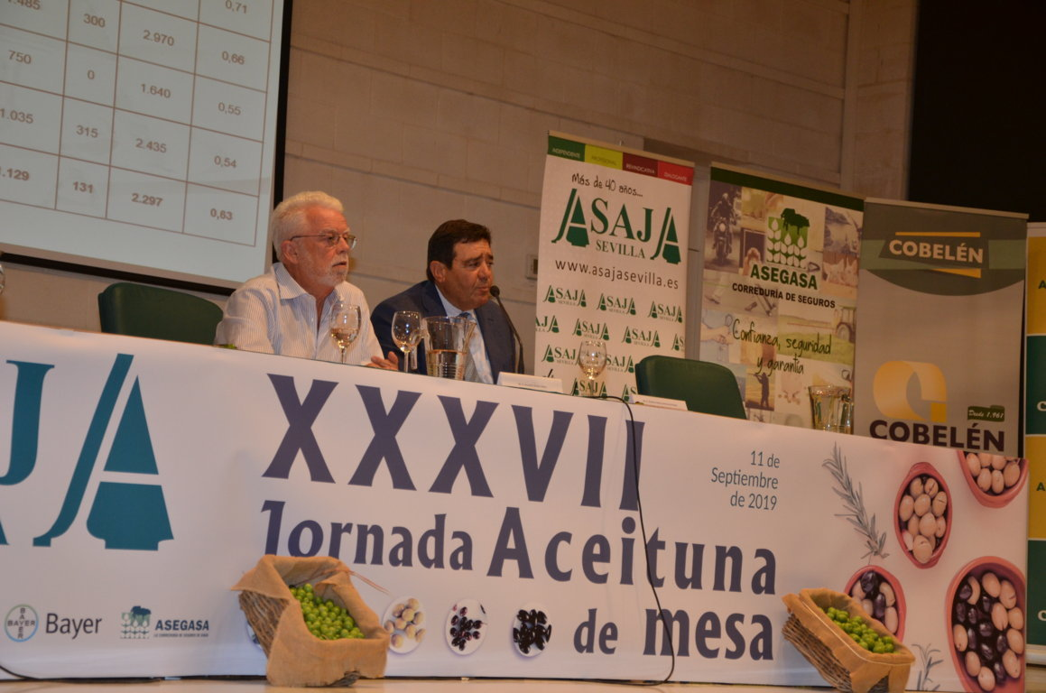 La producción española de aceituna de mesa 2019/2020, con 487.000 t, la menor de la última década