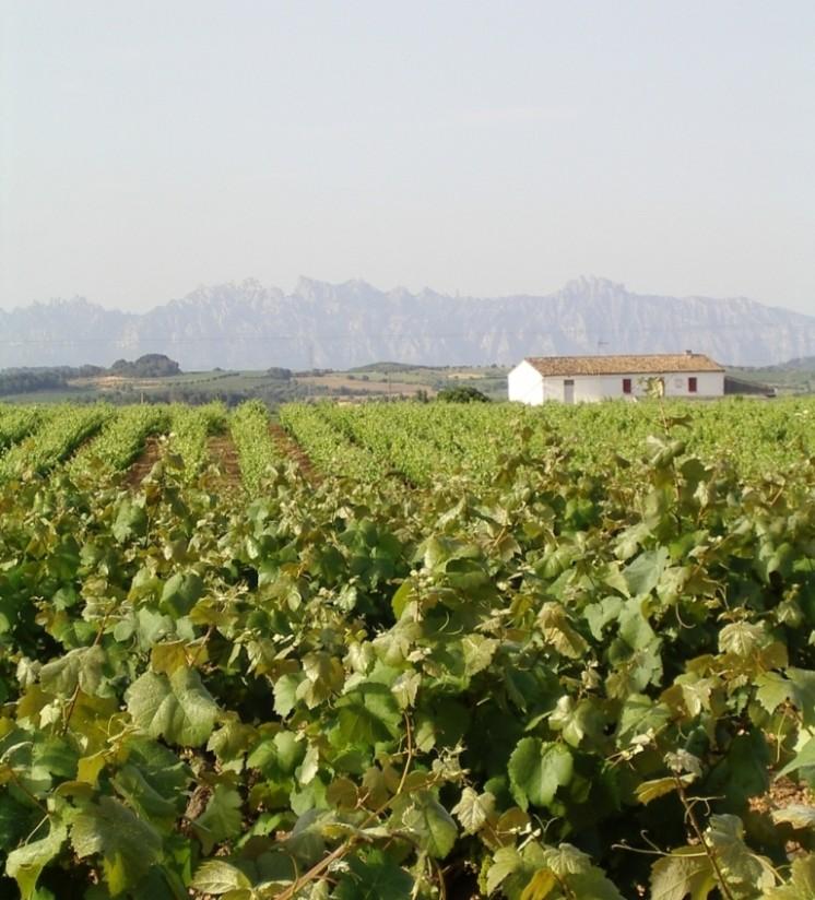 La DOCa Rioja no autorizará un incremento de su masa vegetal vitícola al menos hasta 2021