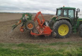 Importancia de la elección de la fecha de siembra de la alfalfa
