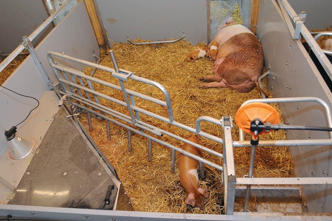 Be.Well, el nuevo concepto de WEDA para garantizar bienestar animal en explotaciones