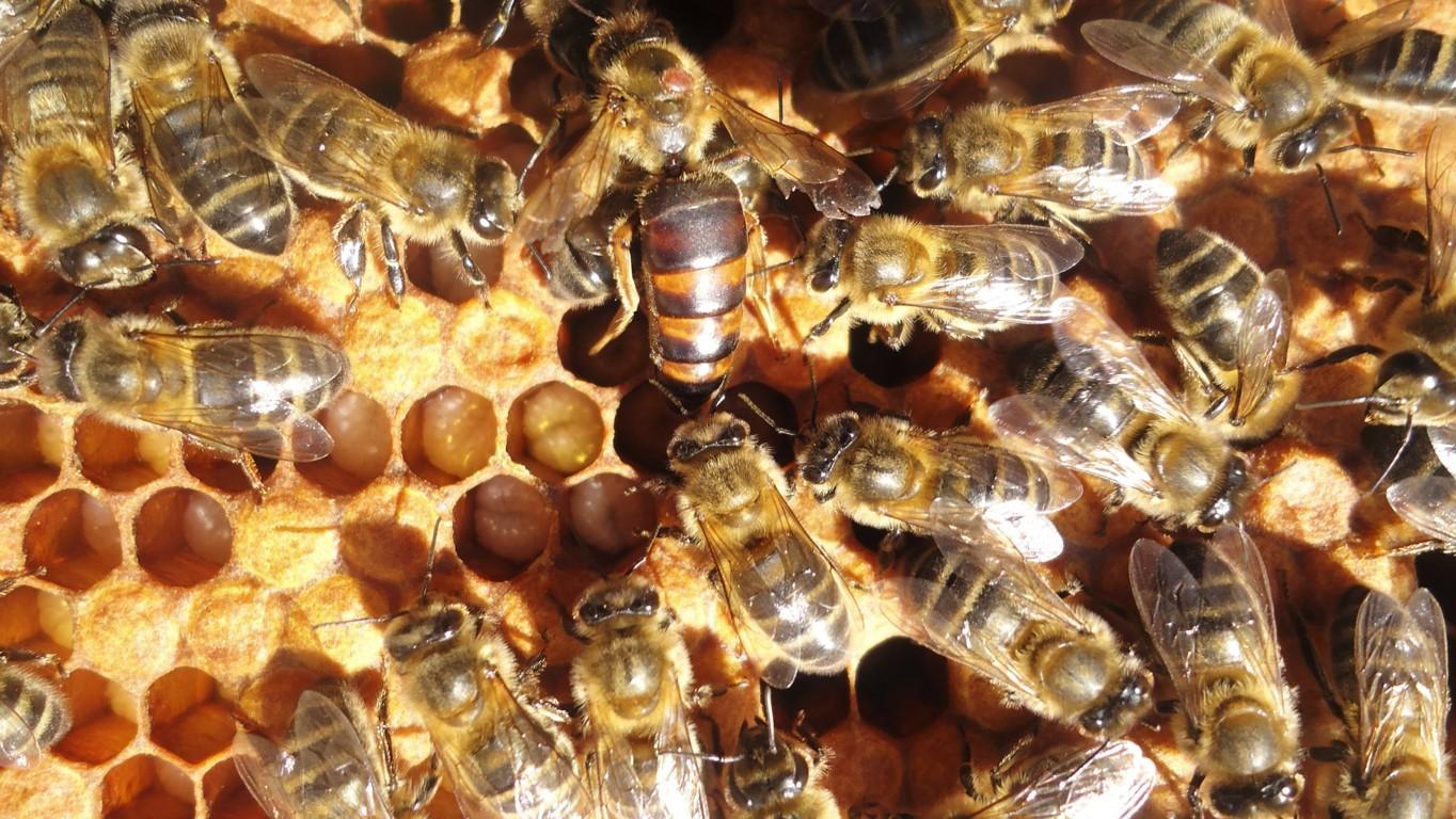 La Eurocámara pide reducir el uso de pesticidas para salvar a las abejas y otros polinizadores