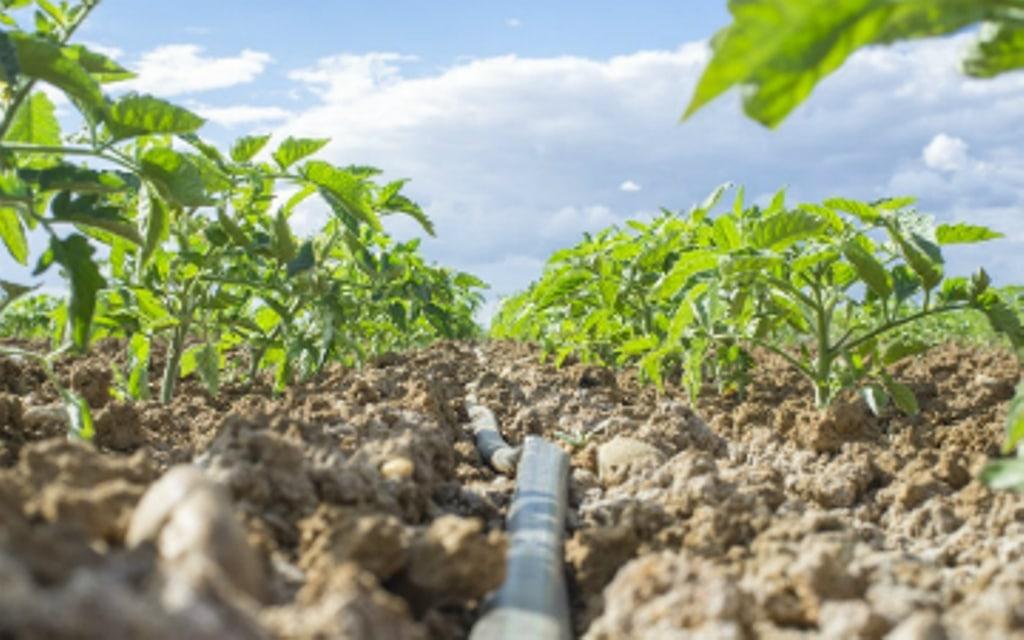 Medidas para garantizar la sostenibilidad de la agricultura mediterránea