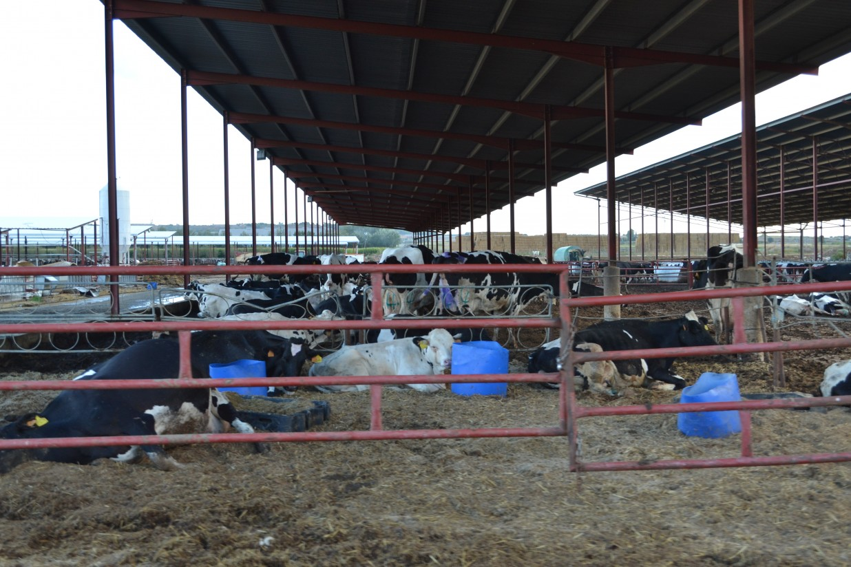 El uso del forraje en explotaciones de vacuno de leche