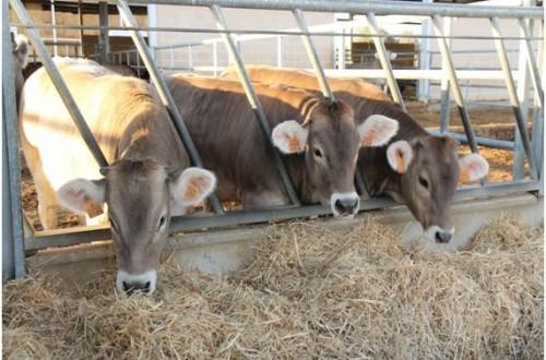 Contribución de la ganadería española a las emisiones de metano