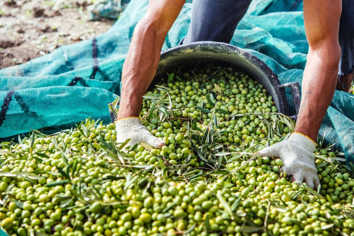 Proyecto andaluz Atresbio: obtención de bioproductos procedentes de residuos del olivar, la horticultura y la biomasa algal