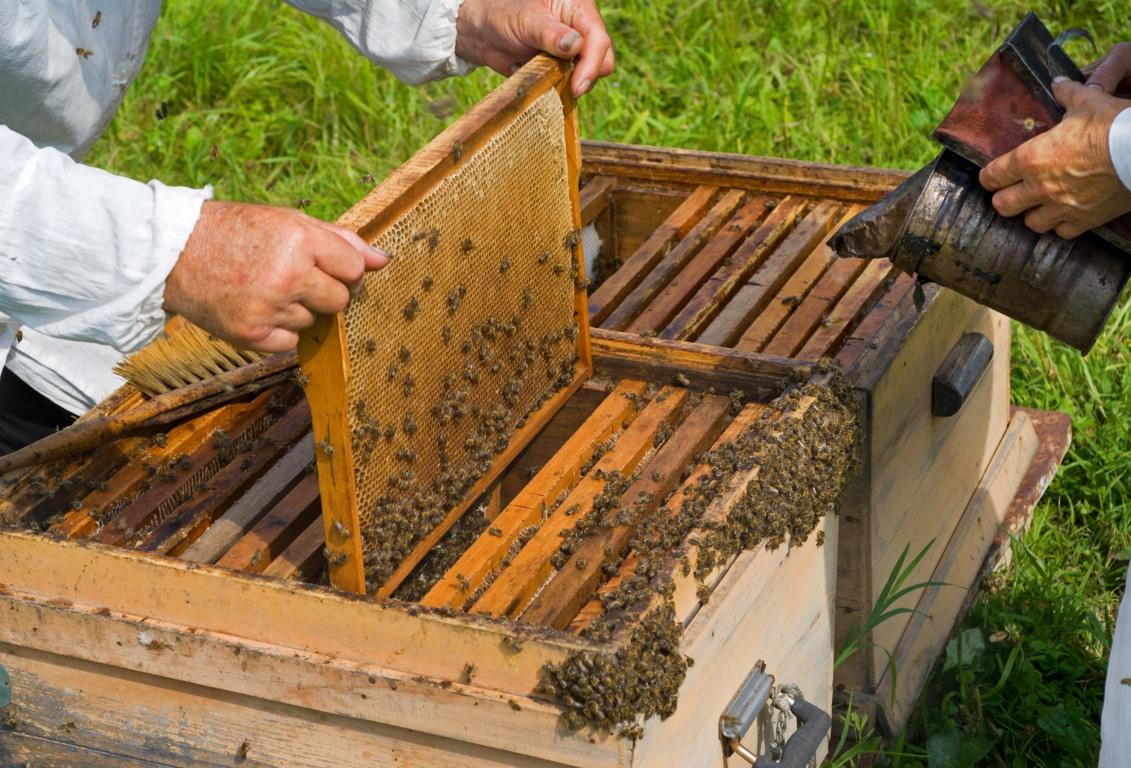 El colectivo apícola se manifestará el viernes 31-E por el etiquetado de la miel y otros problemas del sector