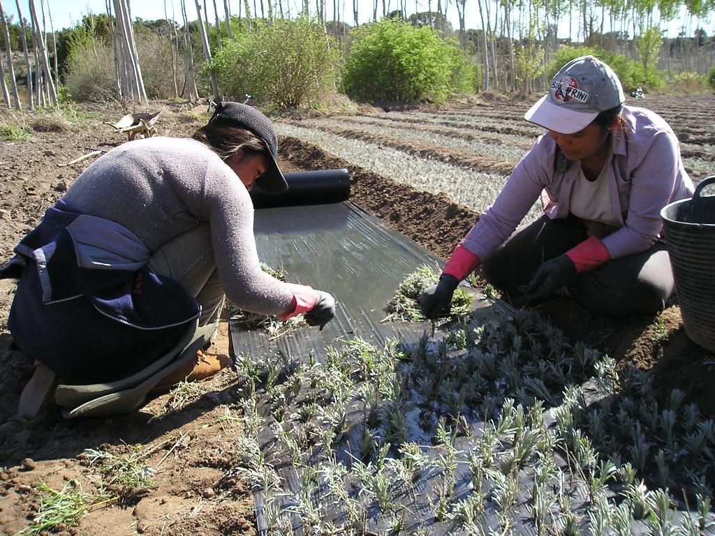 El alza del SMI de los trabajadores agrícolas por cuenta ajena supondrá 21,56 M€ más para la Seguridad Social