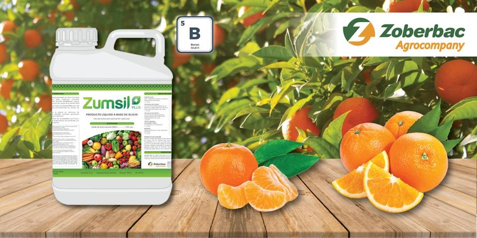 Zumsil Plus, silicio contra el exceso de boro en los cítricos
