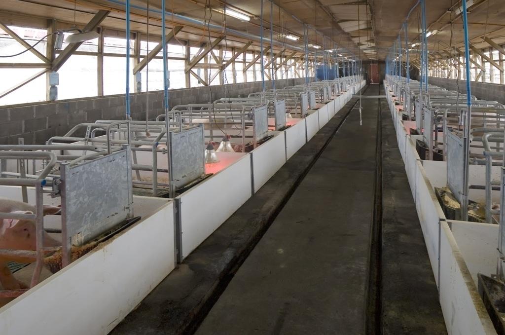 Publicado el RD 306/2020 sobre normas básicas para la ordenación de granjas de ganado porcino