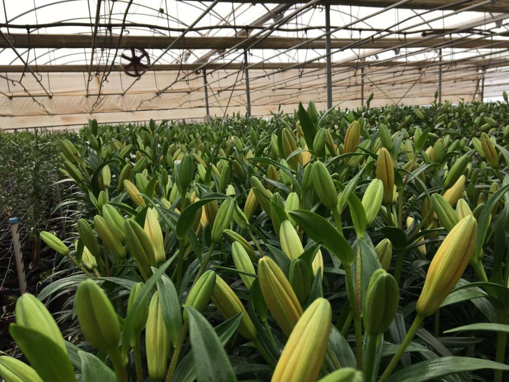 FEPEX pide medidas urgentes para que no se hunda el sector de flor y planta viva