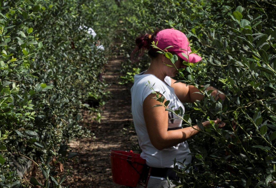 Los pequeños productores percibieron 80,44 M€ de pagos directos en la campaña PAC 2019