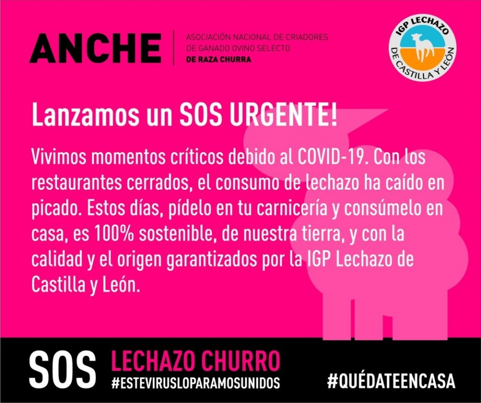 ANCHE lanza la campaña #HoyComproLechazo para fomentar el consumo en España