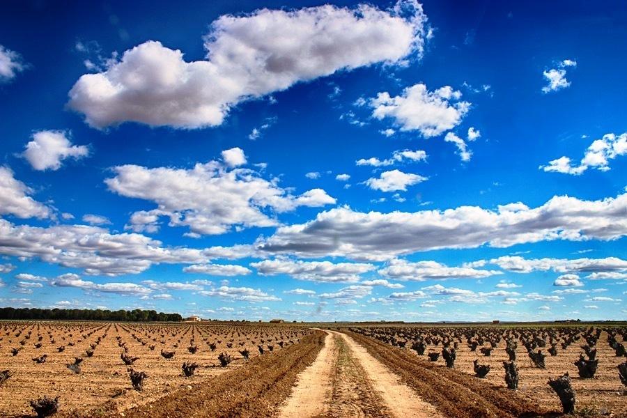 Castilla-La Mancha pide ya ampliar el plazo del periodo de solicitud única de la PAC