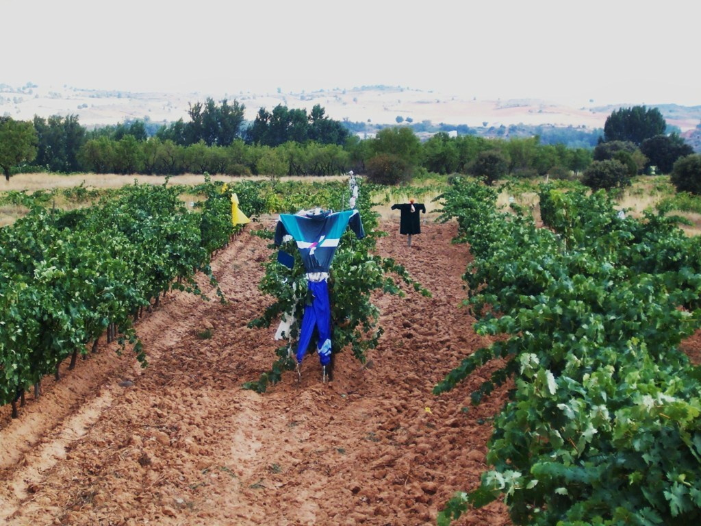 Más paro y menor afiliación a la Seguridad Social de trabajadores agrarios por cuenta ajena en febrero