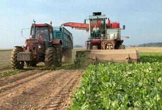 Covid-19: Francia anima a sus parados a unirse al «ejército de la agricultura»