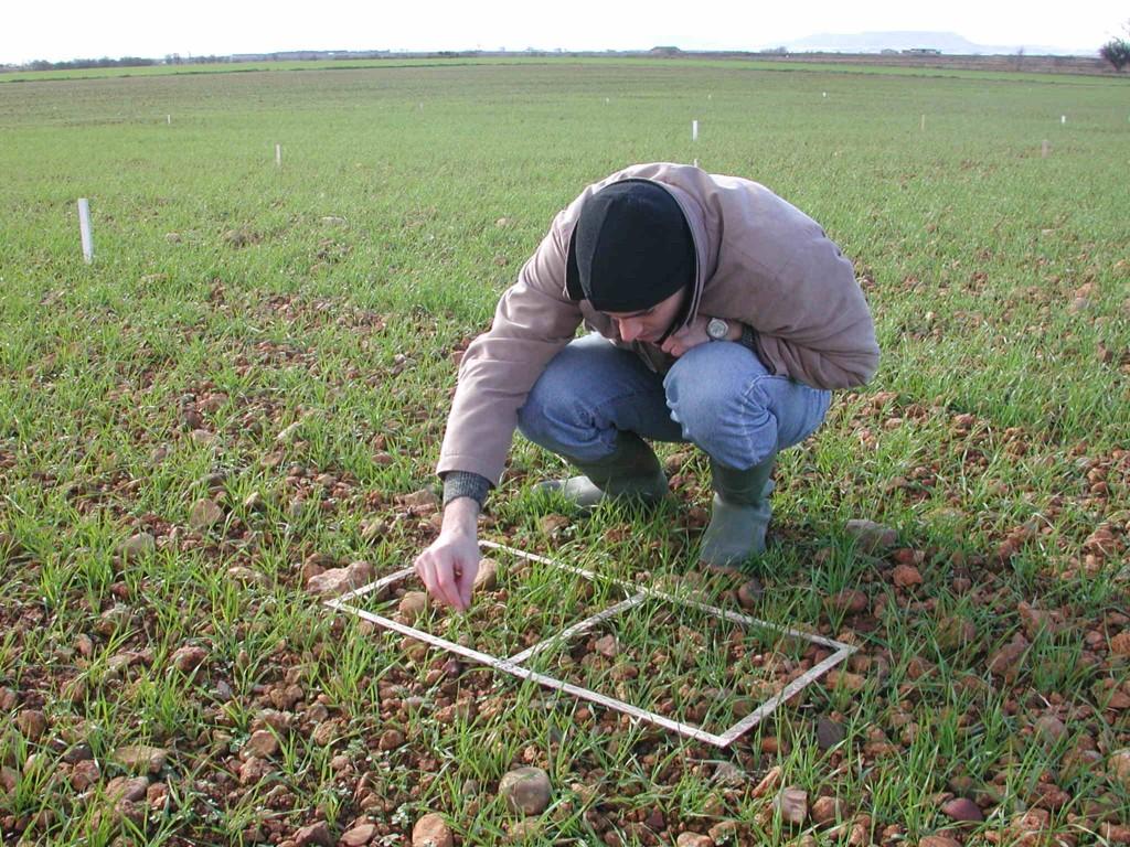 Los ingenieros agrónomos piden más fórmulas que contribuyan a mejorar las rentas de agricultores y ganaderos