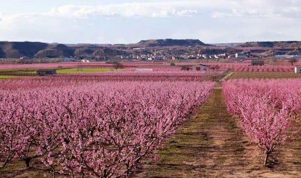 Afrucat solicita que no se detenga el suministro de materiales para la industria frutícola