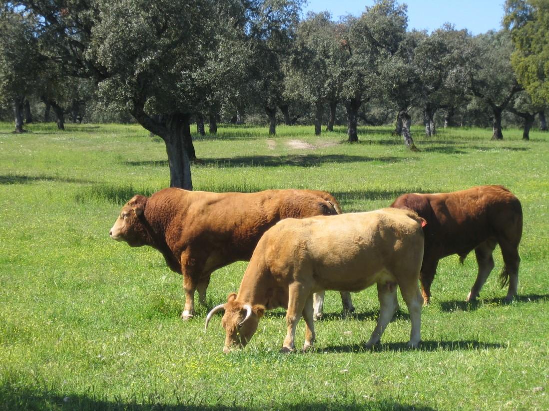 La profesión veterinaria ante los retos de la ganadería extensiva
