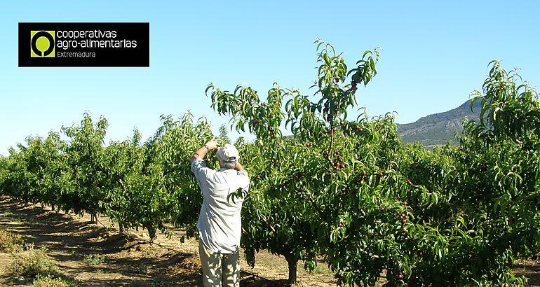 Cooperativas Extremadura cubre todas las ofertas para trabajar en sus entidades socias