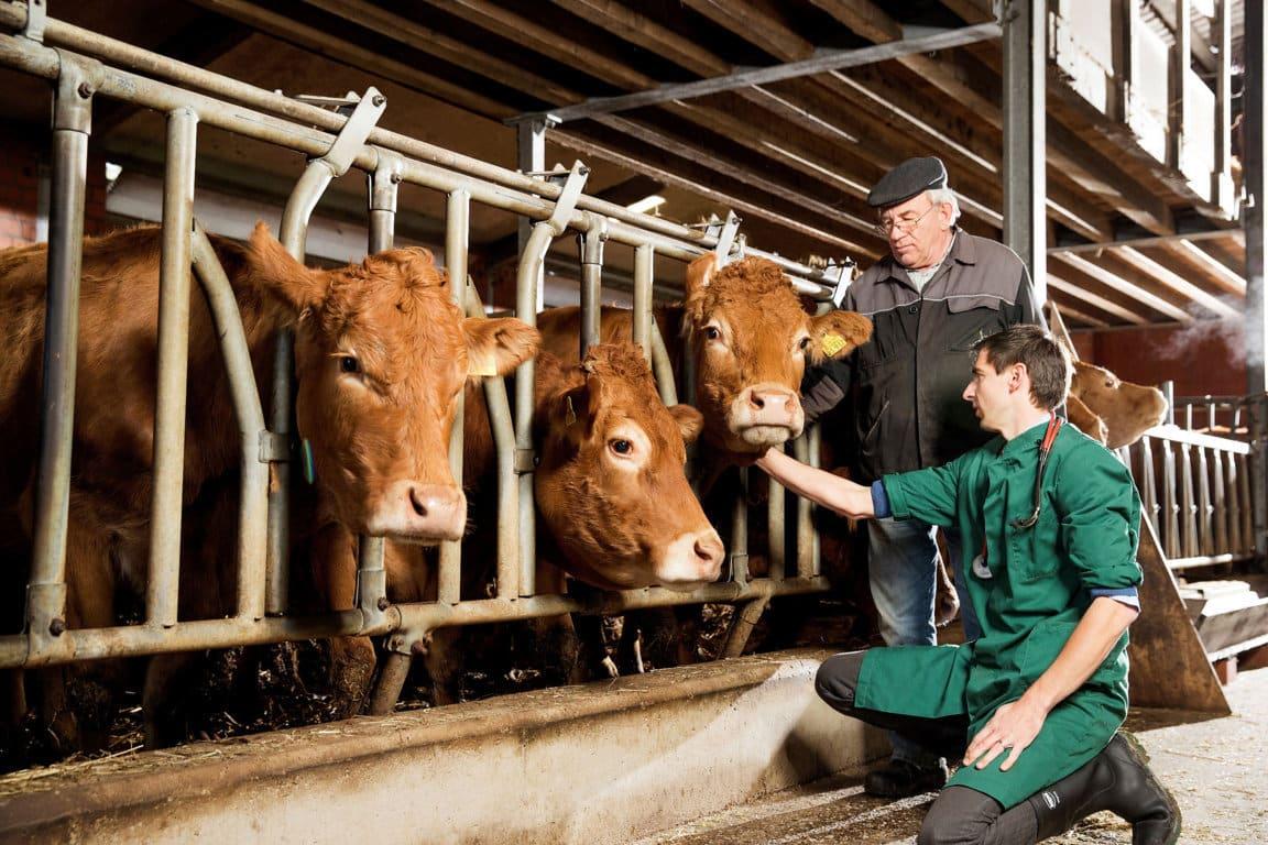 """La OCV subraya el papel """"plurifacético e imprescindible"""" de los veterinarios en su Día Mundial"""