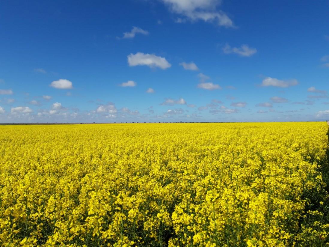 Nergetic Dynamic DS+, el fertilizante con todos los nutrientes protegidos de Fertiberia Tech