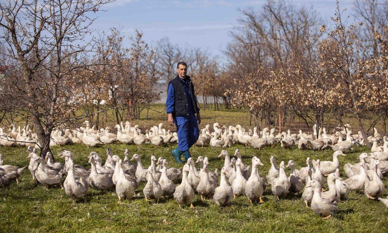 Interpalm lanza #DescubreElFoieGrasEnCasa, una campaña en defensa de los pequeños empresarios de esta ganadería alternativa