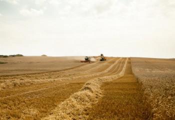 Moratoria de seis meses de cotizaciones sociales que incluye a los cultivos agrícolas