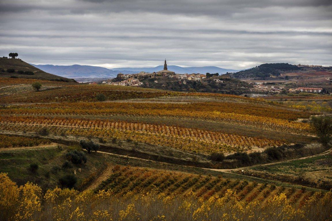 La DOCa Rioja adapta sus recursos para aliviar tensiones de tesorería de bodegas y viticultores