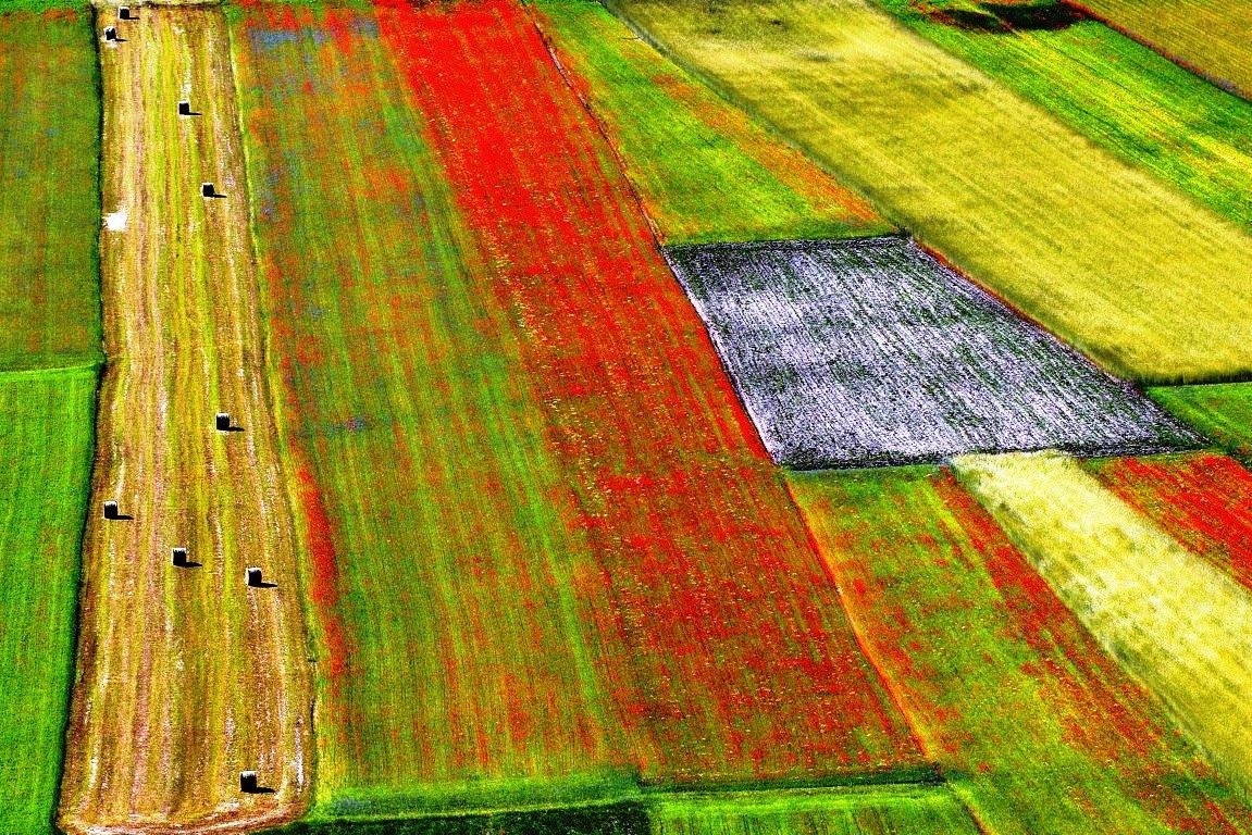 Los ministros de Agricultura de la UE reclaman medidas adicionales urgentes para el sector