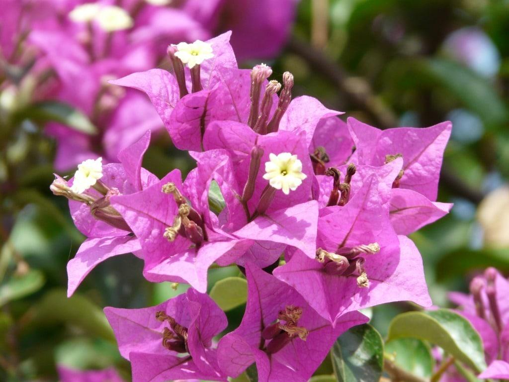 Reactivación del sector de flores y plantas a través de la venta online