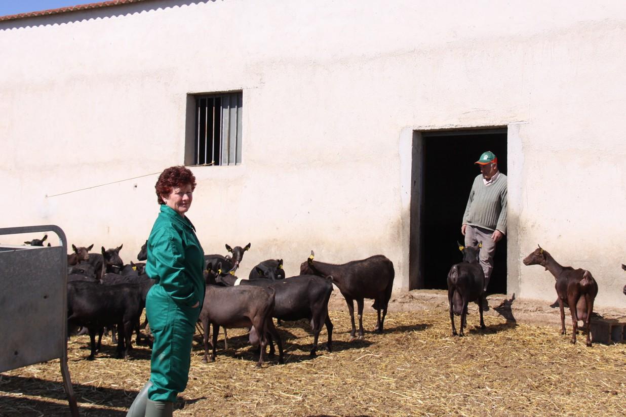 Covid-19: UPA propone ayudar a los ganaderos de caprino a reducir un 10% su producción láctea