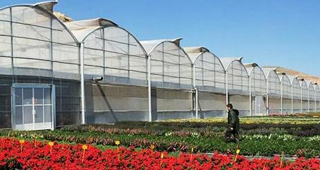 El sector europeo de flores y plantas vivas solicita un apoyo extraordinario y urgente