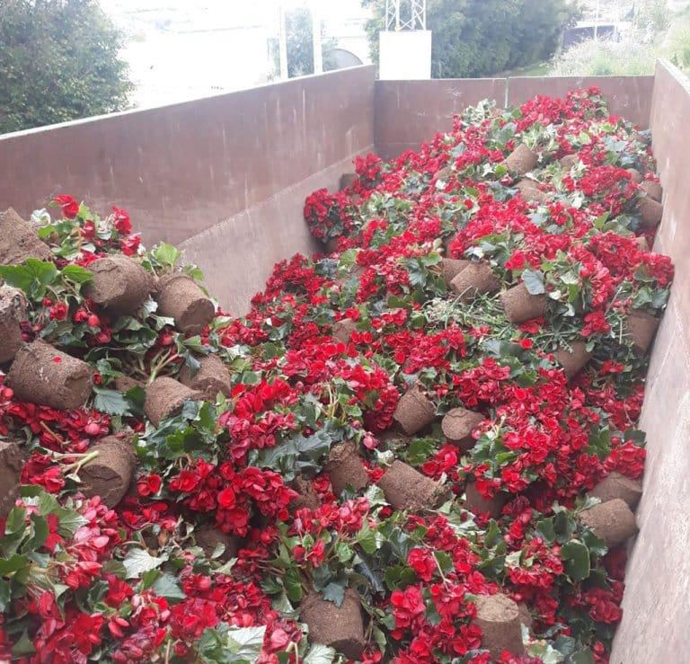 """Covid-19:  el sector de flores y planta viva pide apoyo """"útil"""" a la UE y Holanda da 600 M€ en ayudas de Estado"""