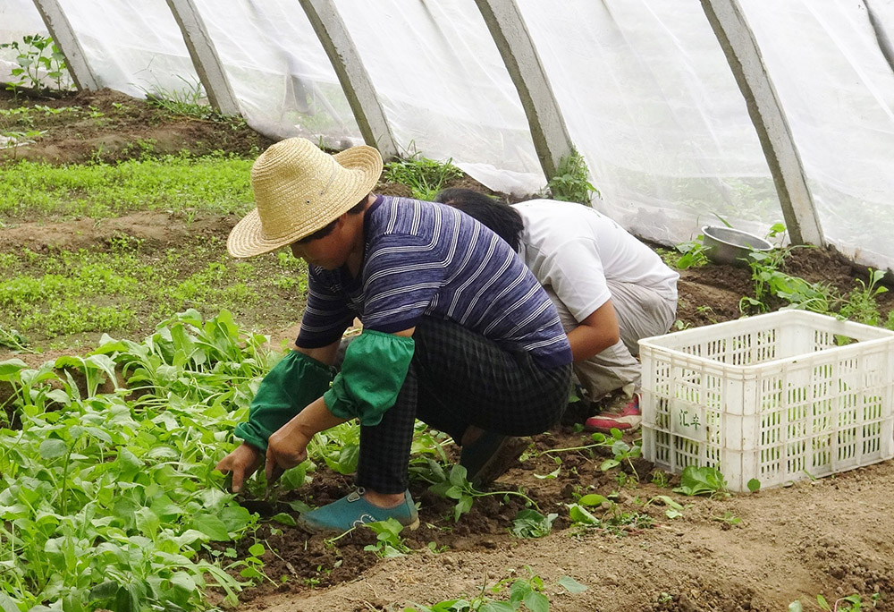 Covid-19: La actividad agraria resiste a la drástica caída de empleo y cotizantes en abril