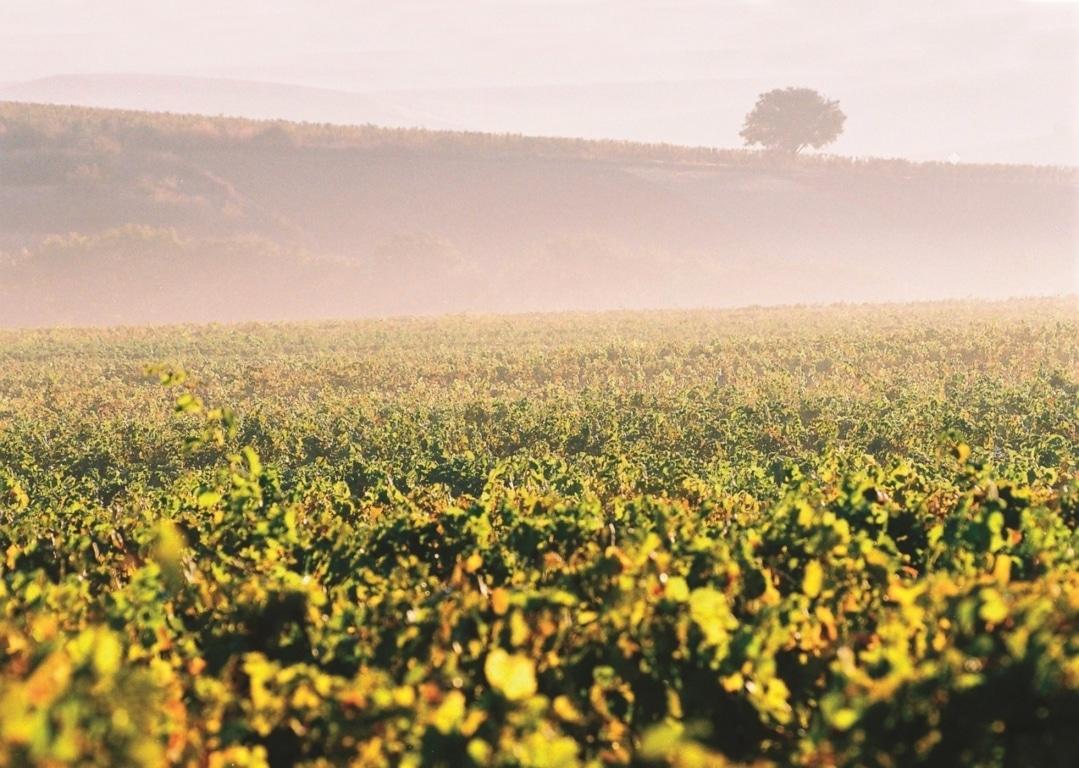 OIVE reclama fondos extraordinarios para una mayor efectividad de las medidas de apoyo al sector vitivinícola