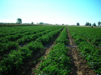 Ensayos con Kiplant AllGrip muestran incrementos de producción de más del 12% en tomate