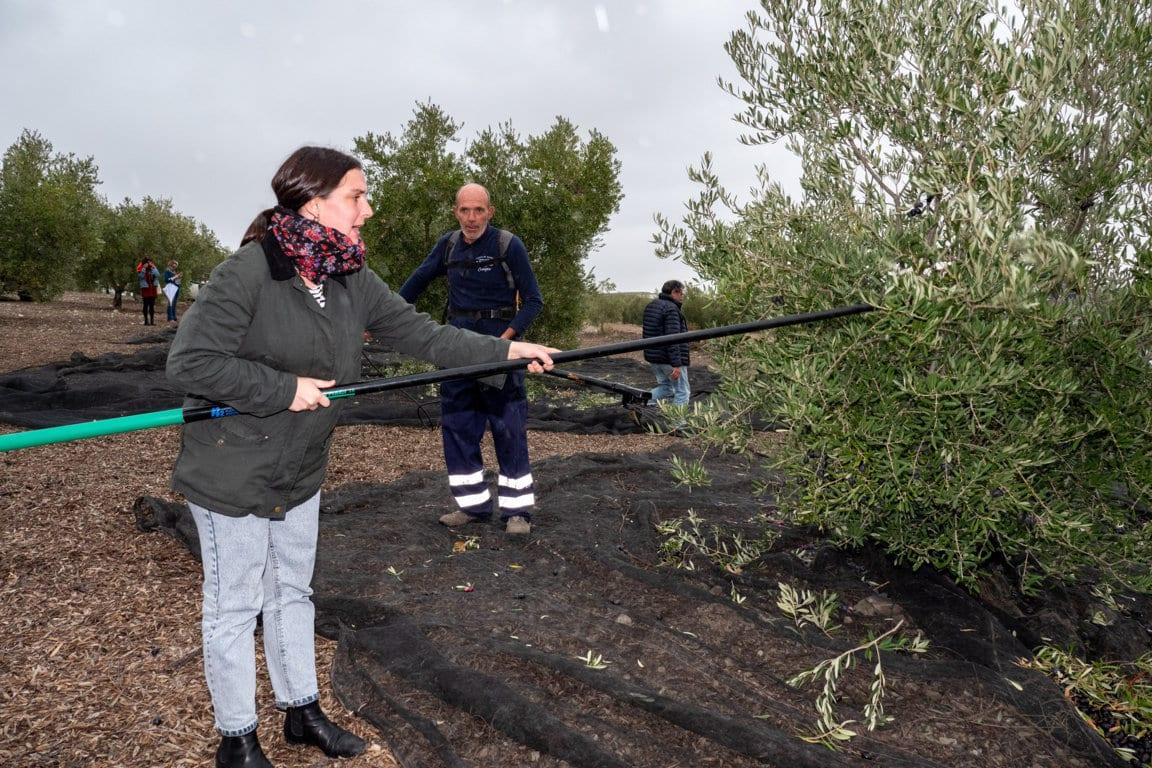 Covid-19: el debilitado sector productor de aceite de oliva y aceituna de mesa lanza un S.O.S urgente a la UE